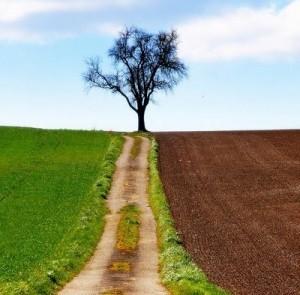 albero strade
