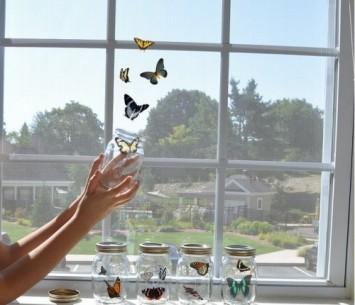 farfalle barattolo