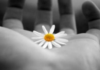 fiore nelle mani