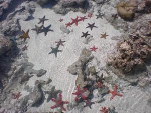 stelle marine 1