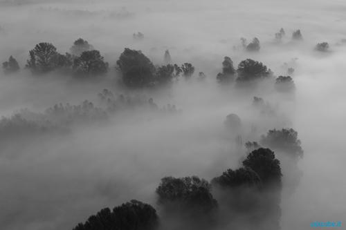 paesaggio con nebbia