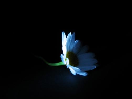 la-luce-nel-buio
